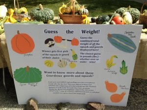 Guess the Weight of the Squash