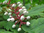 Guided Garden Walk – Native Plants