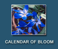 Calendar of Bloom