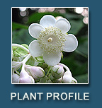 Weekly Plant Profile